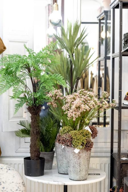 Plantas, flores y macetas